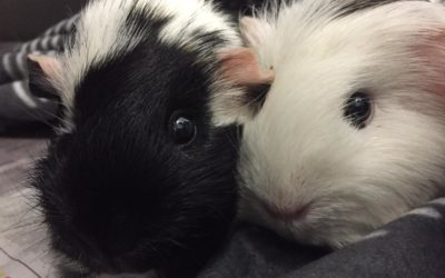 Pet of the Week – Fin and Toffee Gooden