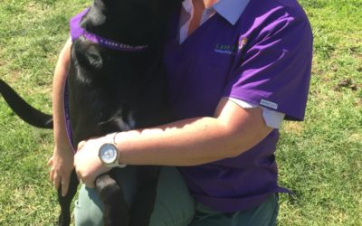 Pet of the Week – Angus the Black Lab