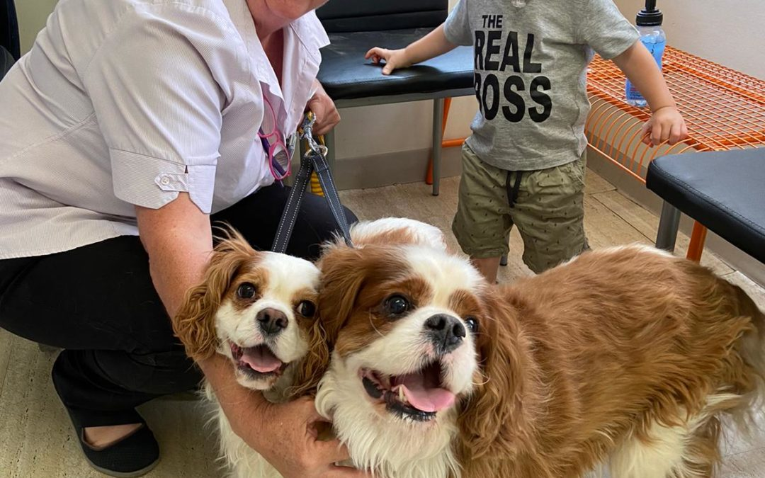 Pet of the Week- Harry and Murphy
