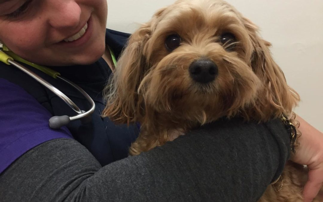 Pet of the Week-Coco Graham