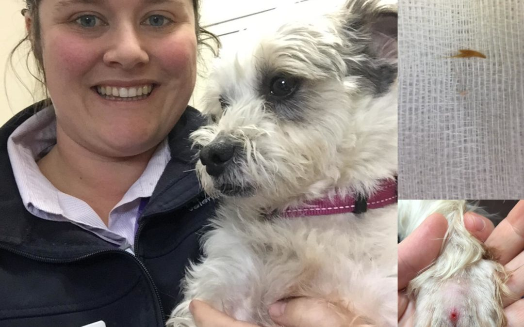 Pet of the Week-Scooter