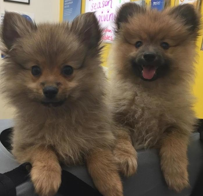 Pet of the Week- Zeus and Sherry